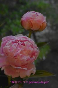 「自宅レッスン」 - 世田谷区羽根木 東松原の小さなお花の教室   「森のアトリエ  pommes de pin」