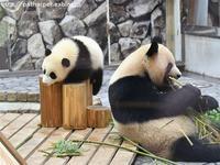 2017年5月 白浜パンダ見隊 その3 - ハープの徒然草