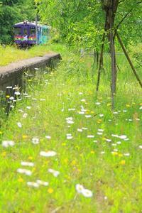 今年は黄色が少ない - 今日も丹後鉄道