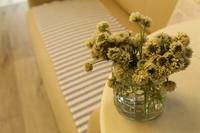 夏の切花のお手入れについて - 北赤羽花屋ソレイユの日々の花