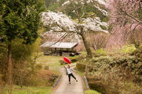 里の春 - YUKIPHOTO/平松勇樹写真事務所