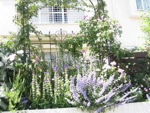 お庭を訪ねる NO2 - 心とカラダが元気になるアロマ&ハーブガーデン教室chant rose