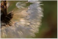 無数の雫たち - ハチミツの海を渡る風の音
