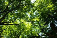 緑の天国 ♪ - Lovely Poodle