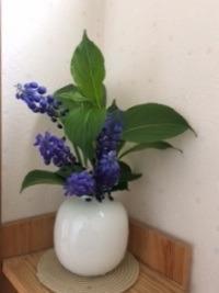 トイレの花 - 好奇心旺盛なおかんのひとりごと。