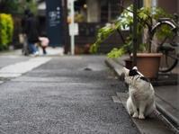 「上野時空遊行ー歴史をひもとき今を楽しむー」     浦井正明 - たゆたふままに