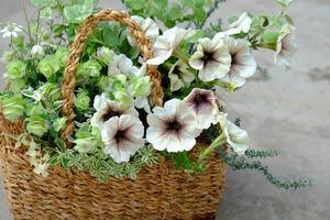 お花えらびオーダー寄せ植え - mon dimanche blog
