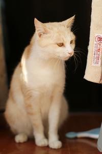 縁側のハル - Black Cat Moan