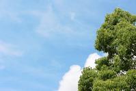 奇(くす)し、薬の木 - 丹馬のきょうの1枚
