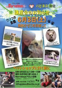 6月3日(土)譲渡会のお知らせ【秋田犬多数参加します】!! - もももの部屋(家族を待っている保護犬たちと我家の愛犬のブログです)