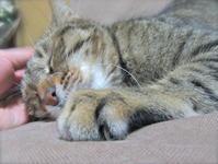 自分で守るしかないのです。 - 世帯主は猫なんです。