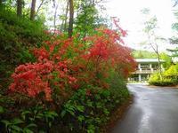 ツツジが咲き始めてきました~。 - 乗鞍高原カフェ&バー スプリングバンクの日記②