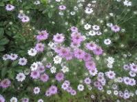 ニゲラ溢れる庭へ - 花の自由旋律