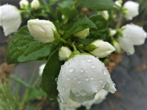 雨の日、気になる小鳥ちゃん達。 - 私の息抜き(^o^)