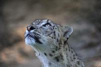 「ミルチャ」 木に登る - 動物園放浪記