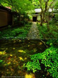 五月の蓮花寺 - あ お そ ら 写 真 社