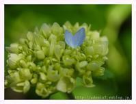 青いハート - ほっとひと息