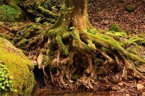 神秘の森 - Eikoのデジタルフォト