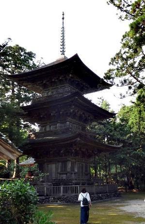 三重の塔と元気を貰った杉の木 - じょんのび