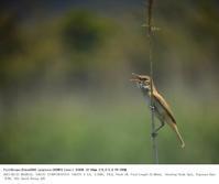 2017.5.21(2) - 鳥撮り遊び
