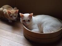 猫さん、湯加減いかがですか。 - 3色猫だんご+1