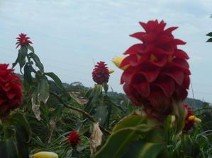 なかなか覚えきれないな?カフェ横の花壇取り終えた。 - 沖縄山城紅茶茶摘み日記