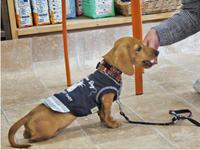 犬のしつけ方教室 5/25 - SUPER DOGS blog