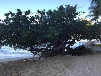 嫁3人が行く! ハワイ珍道中 13 - いつとこ気まぐれブログ