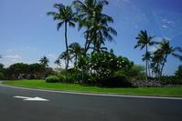 ハワイ旅行 4日目5月2日ハワイ島からオアフ島へ コナ空港へ車窓から 14 - Let's Enjoy Everyday!