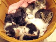 乳飲み子6匹! - 家なき猫