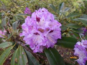 もうすぐ紫陽花の季節 - お花 to 園の情報