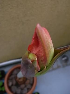 次に咲く花 - this twilight garden
