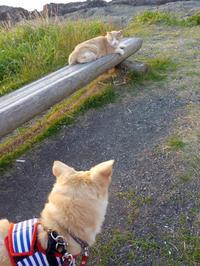 城ヶ島のねこ - Kokiary@ のどかへつなぐ happy days
