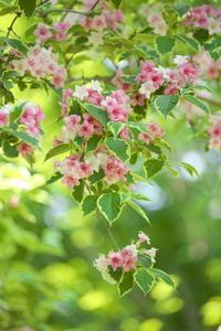 優しく美しい花 - tokoのblog