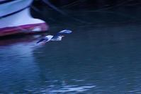 鷺 - kogomiの気ままな一コマ