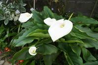 17'05/01 庭の花♪とラティスでゲートを・・・ - Cojum's Diary
