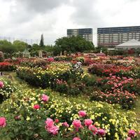 京成バラ園に行ってきました その①~風景~ - misaの庭暮らし~Abandon~