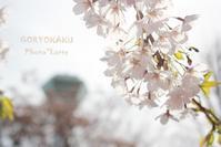 桜旅~#3  - Photo*Latte