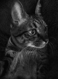 宇宙との交信!トラちゃんの2017年・6月占い《トラちゃん占いは毎月1日》 - 猫丸ねずみの大荒れトーク