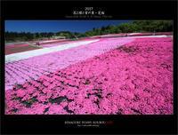 ※ 魚沼・芝桜まつり (2) - 気まぐれ写真工房 new