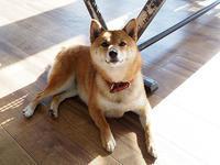 5月27日(土) 柴犬 - ほのぼの動物写真日記