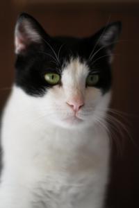 ケージの上のナツ - Black Cat Moan