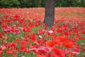 赤の広がる昭和記念公園♪ - 今日もカメラを手に・・・♪