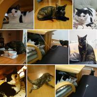 猫の留守番 - 五十路半ば、猫と暮らしと旅日記