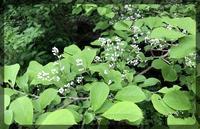高木の白い花 - 森の扉