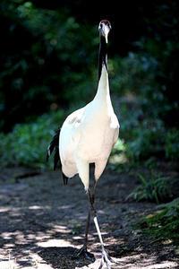 涼やかな「タイラ」 - 動物園放浪記