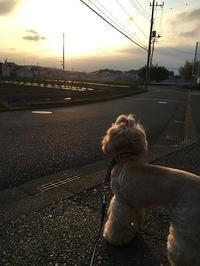 ココと夕日♪ - ココちゃんの「ぽかぽか日記」