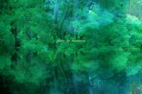 CONNEL COFFEE - Photographie de la couleur