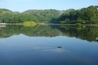 朝、近所の池へ。 - 花、書、音楽、旅、人、、、日常で出会う美しごとを