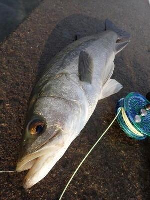 吉野川 - つりのコトと釣りじゃない事